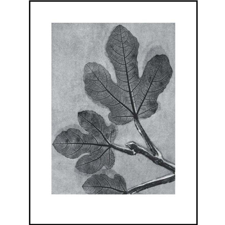 Pernille Folcarelli Illustration Fig Charcoal 30x40