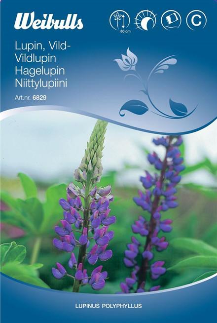 Lupin, blå vild - Lupinus perennis - Frø (W6829)