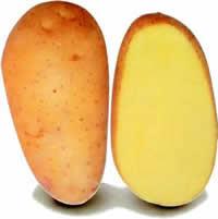 Exquisa - Kartoffel - 25 kg sæk