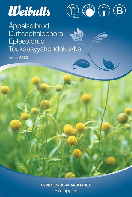 Duftcephalophora - Cephalophora,aromatica - Pineapples - Frø (W6223)