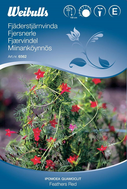 Fjersnerle - Ipomea quamoclit - Feathers Red - Frø (W6562)