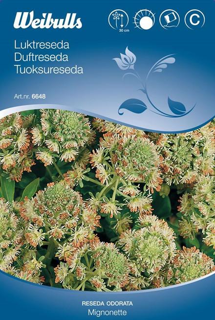 Duftreseda - Reseda Odorada - Mignonette - Frø (W6648)