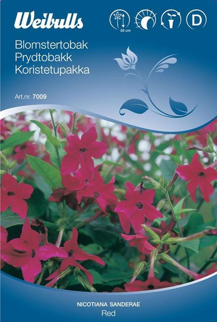 Blomstertobak - Nicotiana - Frø (W7009)