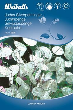 Judaspenge - Lunaria annuua - Frø (W6805)
