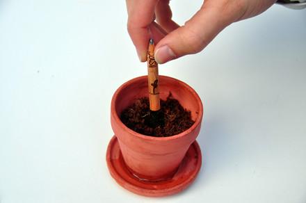 Sprout Plant din blyant, flere varianter