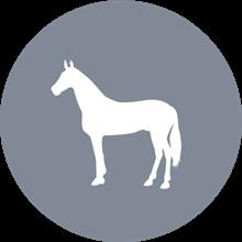 daka afhentning af hest