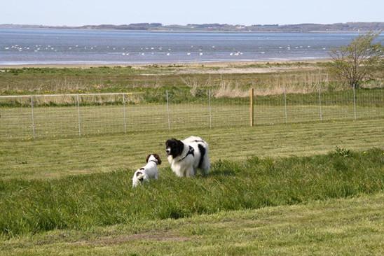 hunde_camping_nordjylland.jpg