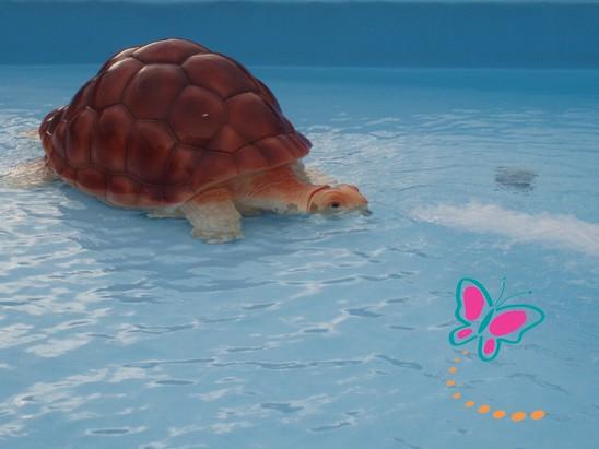 skilledpadde(2).jpg