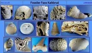 fossil(1).jpg