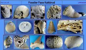 Andre metoder for dating fossiler