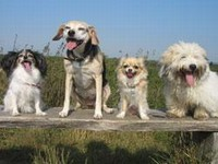 hunde1.jpg
