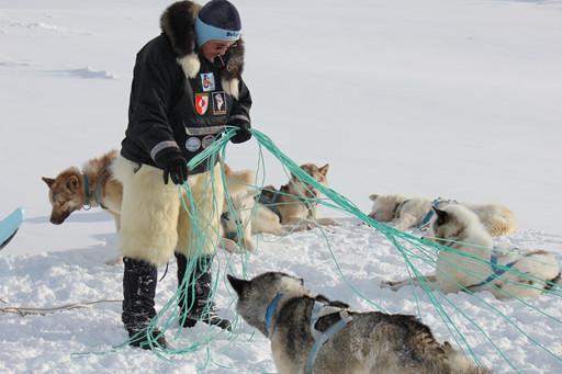 Hundeslæde & Nordlys i Ilulissat