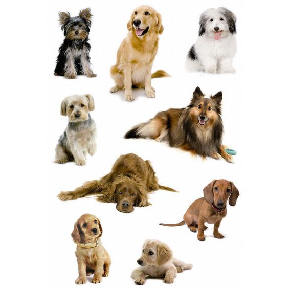 HERMA Decor Stickers dog photos 3 sheets