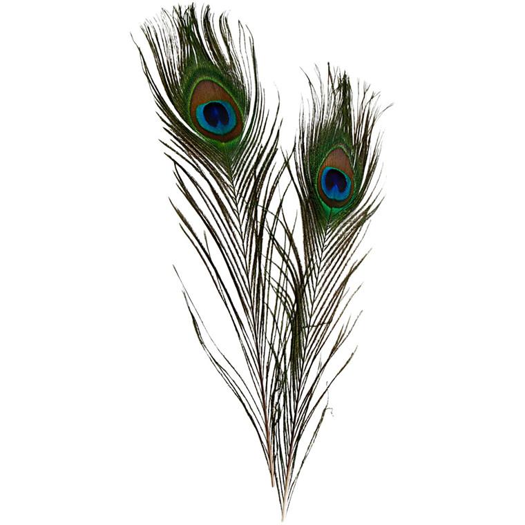 Påfuglefjer 25-30 cm længde - 10 stk fjer