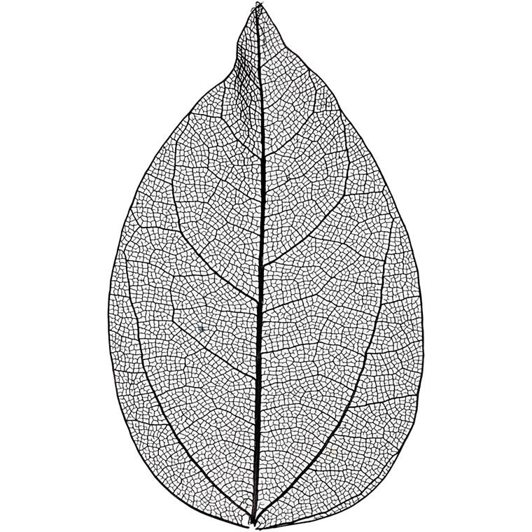 Skeletblade, sort, L: 6-8 cm, 20stk.
