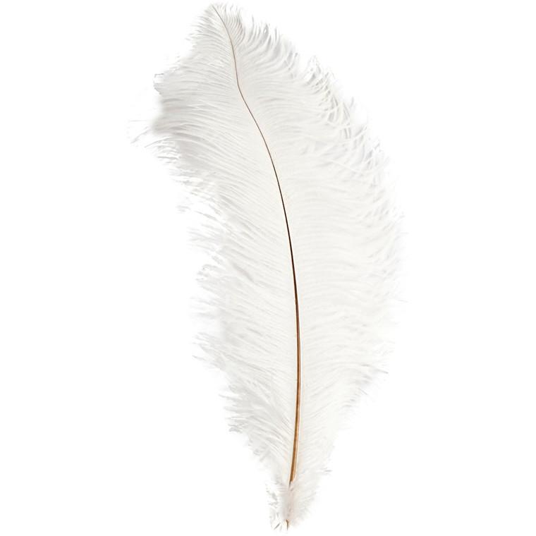 Strudsefjer Længde 35-40 cm - hvid