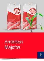 Ambition Majsfrø