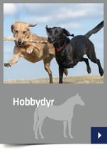 Hobbydyr