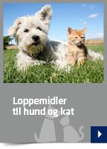 Loppemidler til hund og kat