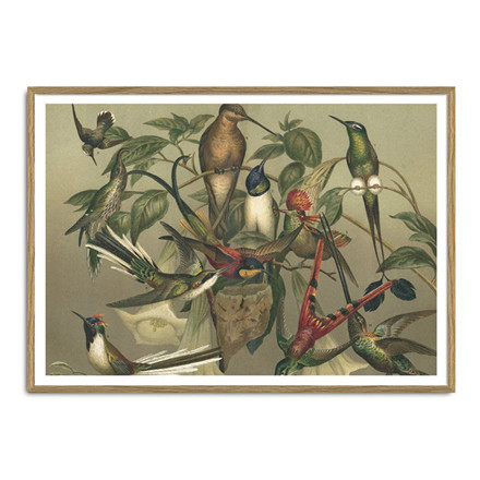 The Dybdahl Co. Hummingbirds Plakat