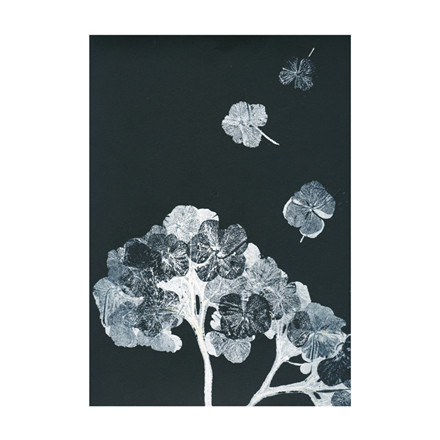 Pernille Folcarelli Hortensia Black Ink Postkort
