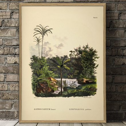 The Dybdahl Co. Astrocaryum Lauari Leopoldinia Plakat