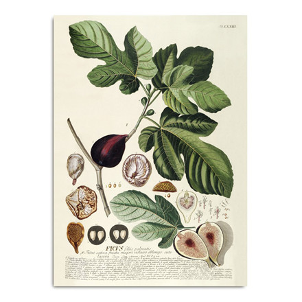 The Dybdahl Co. Ficus Plakat