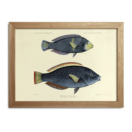 The Dybdahl Co. Fishes Mini Print #RC028