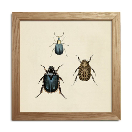 The Dybdahl Co. Insects Mini Print #SQ066