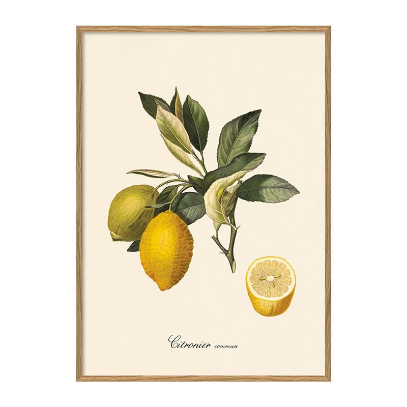 The Dybdahl Co. Citronier Plakat