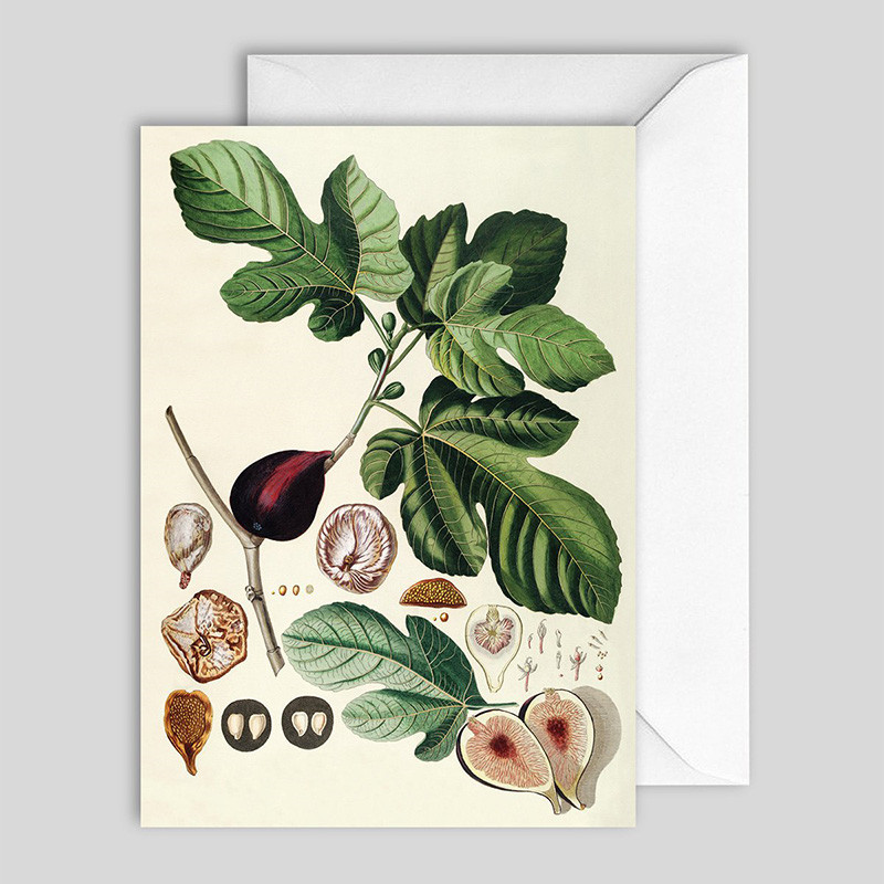 The Dybdahl Co. Ficus Greeting card