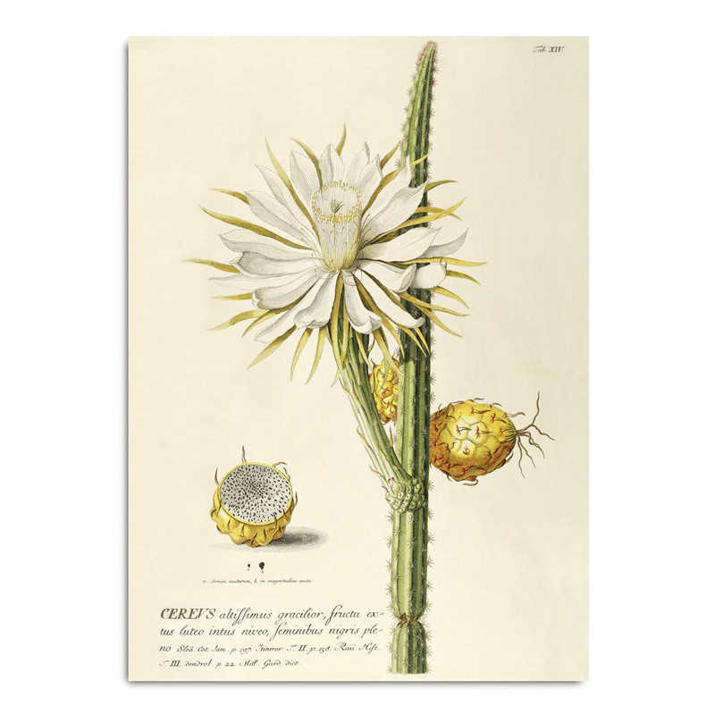 The Dybdahl Co. Cereus Plakat
