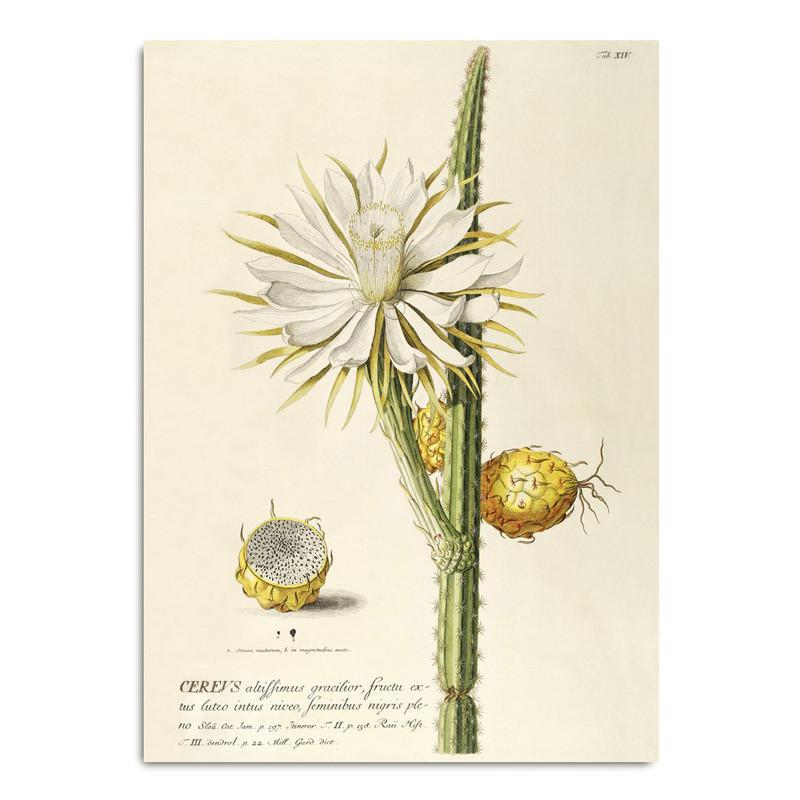 The Dybdahl Co. Cereus Plakat