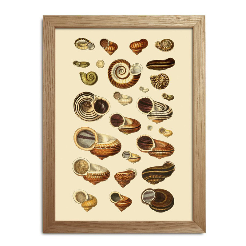 The Dybdahl Co. Sea Shells #RC050
