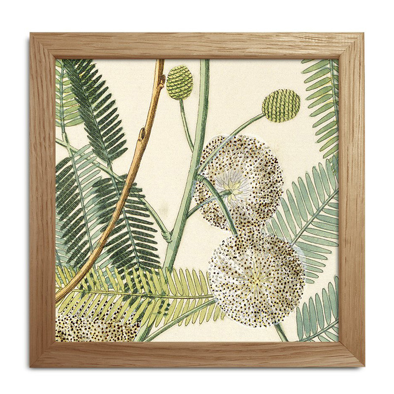 The Dybdahl Co. Plants Mini Print #SQ030