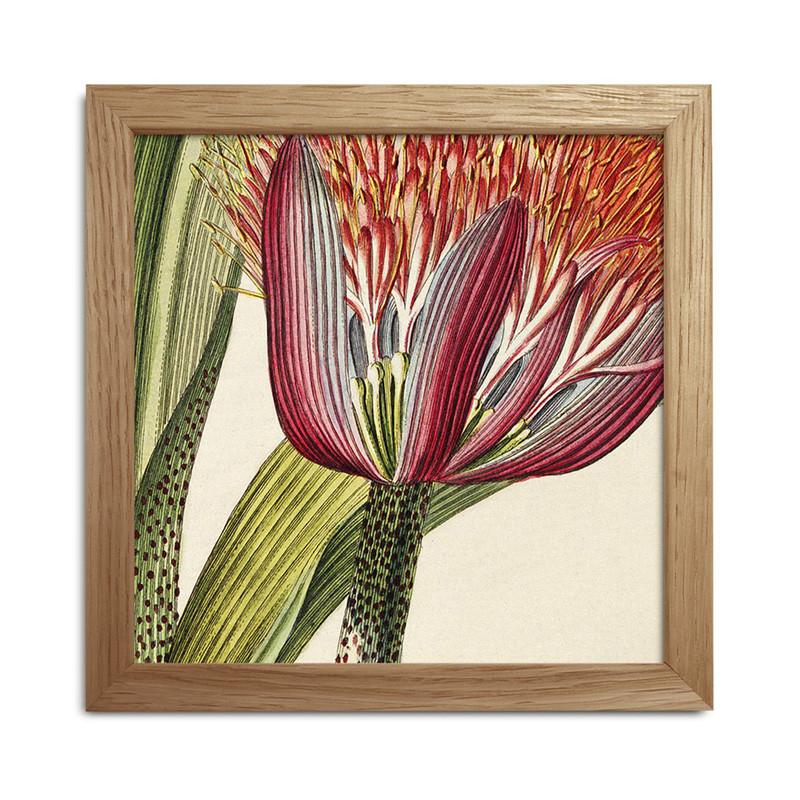 The Dybdahl Co. Plants Mini Print #SQ036