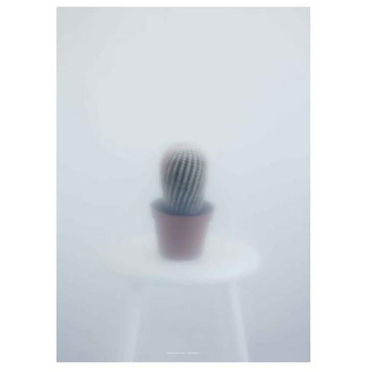 Kristina Dam Ball Cactus II Plakat