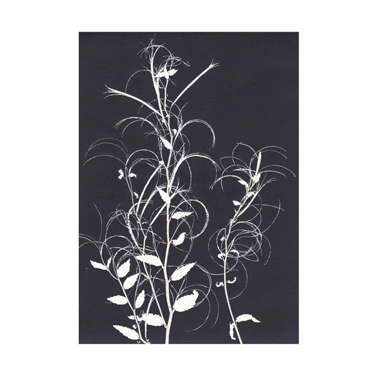 Pernille Folcarelli Willowherb Black Postkort