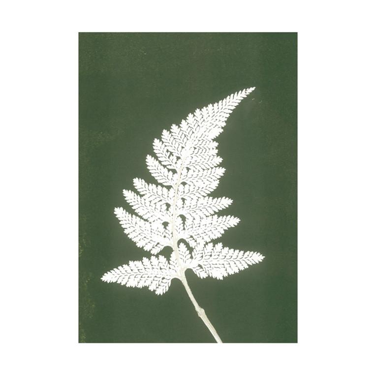 Pernille Folcarelli Fern White Green Postkort