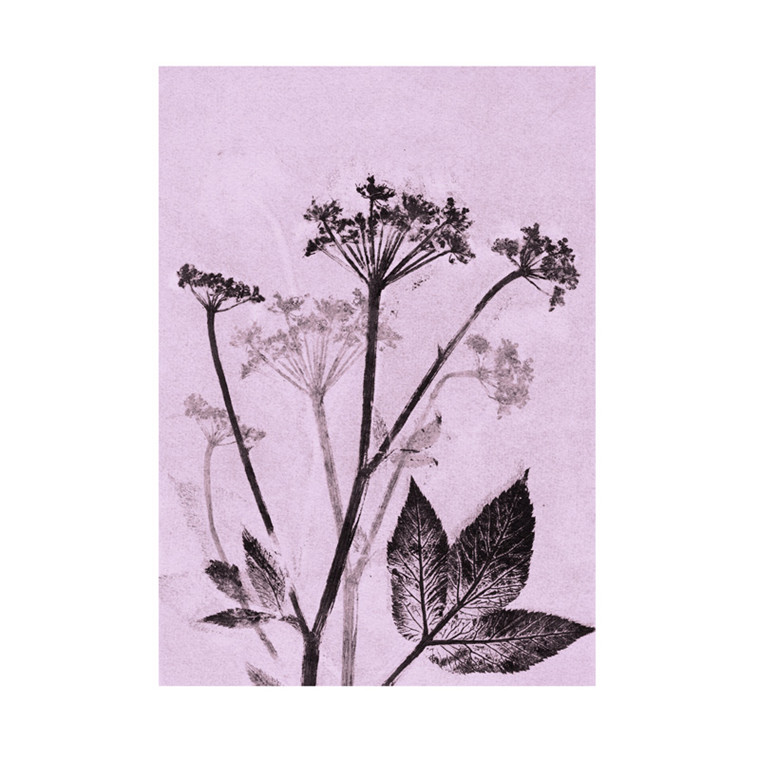 Pernille Folcarelli Groundelder Violet Postkort