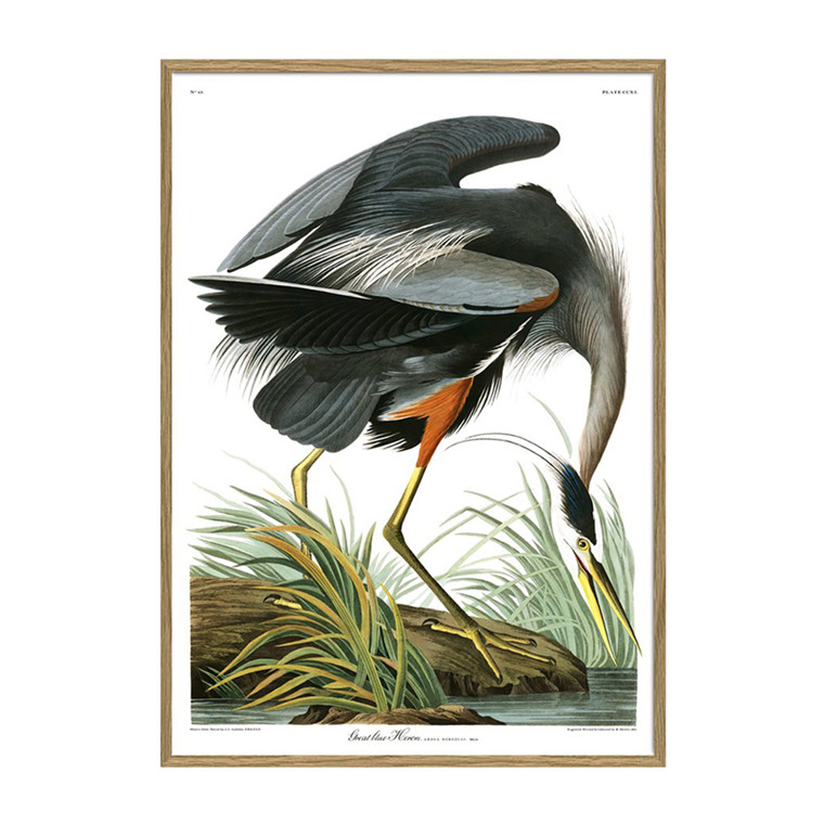 The Dybdahl Co. Great Blue Heron Plakat