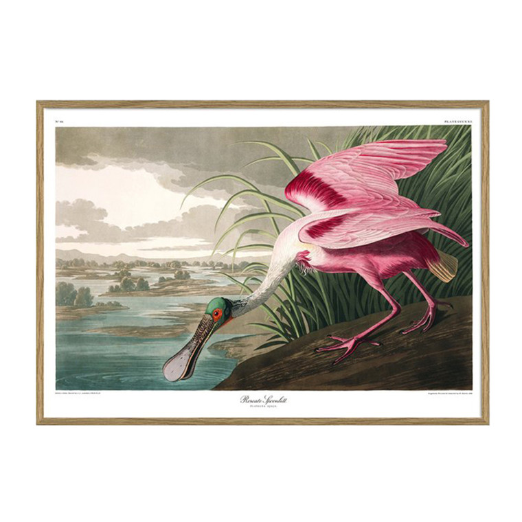 The Dybdahl Co. Roseate Spoonbill Plakat