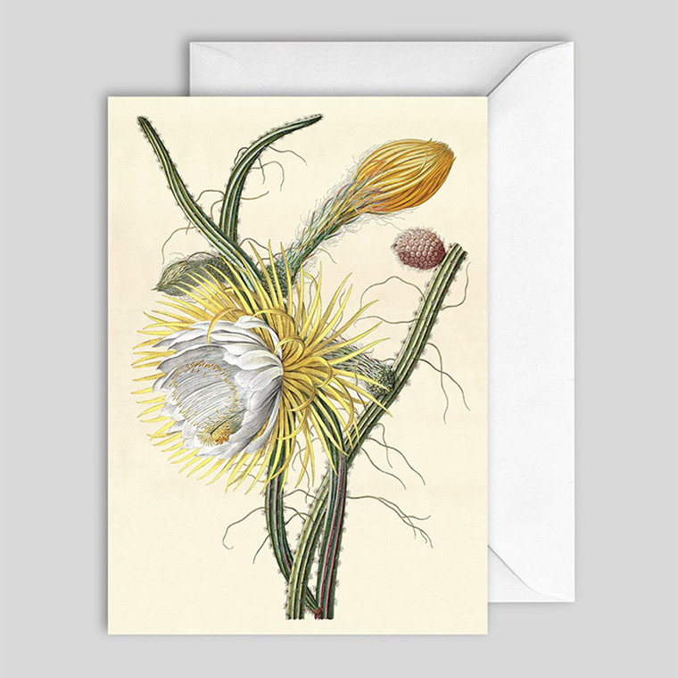 The Dybdahl Co. Cereus Greeting Card