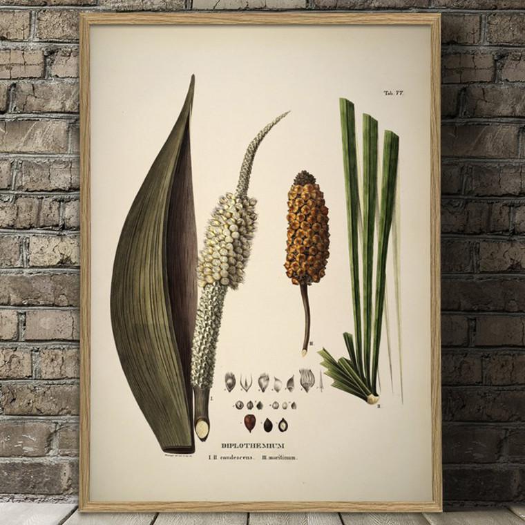 The Dybdahl Co. Diplothemium Caudescens & Maritimum Plakat