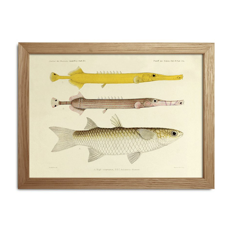 The Dybdahl Co. Fishes Mini Print #RC022