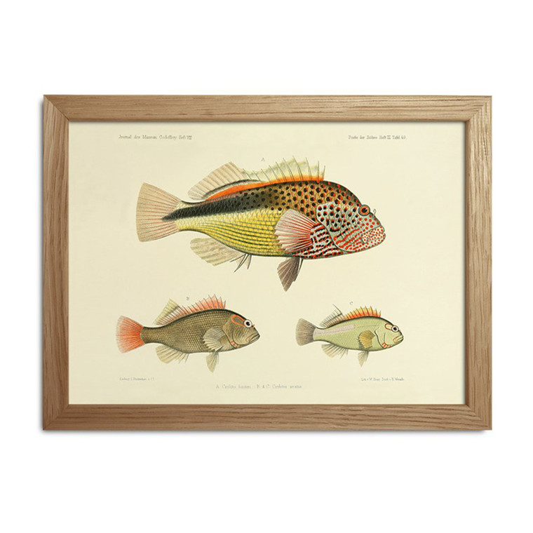 The Dybdahl Co. Fishes Mini Print #RC024