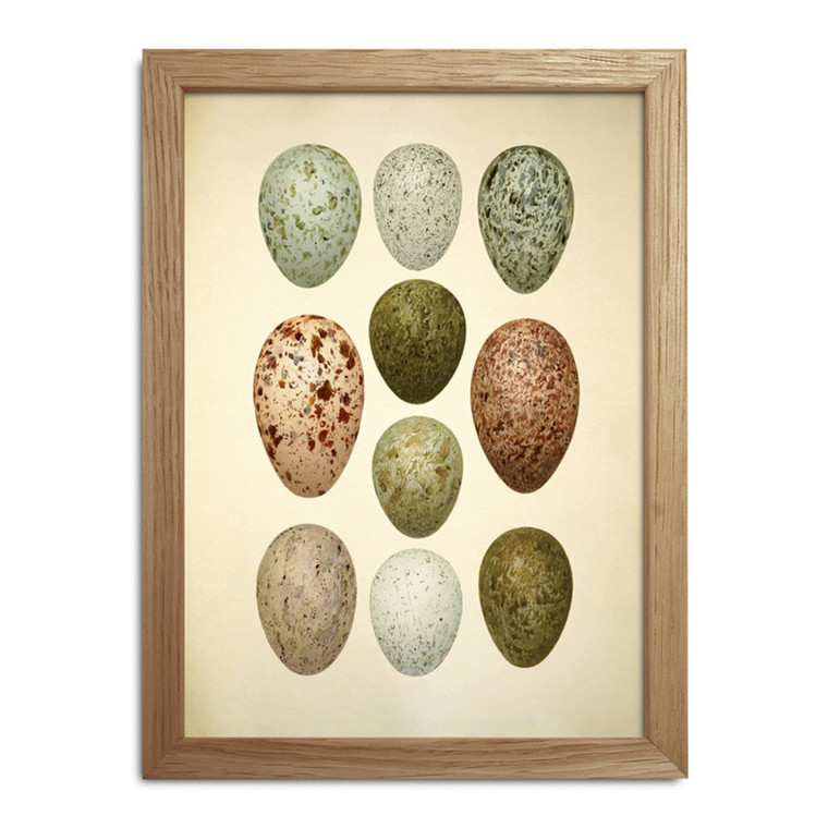 The Dybdahl Co. Eggs & Birds Mini Print