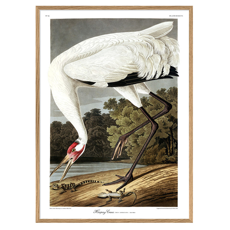 The Dybdahl Co. Whooping Crane Plakat