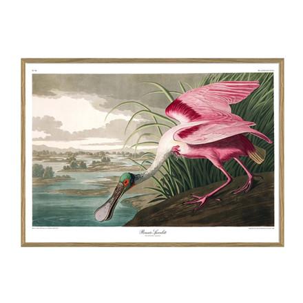 The Dybdahl Co. Roseate Spoonbill Plakat