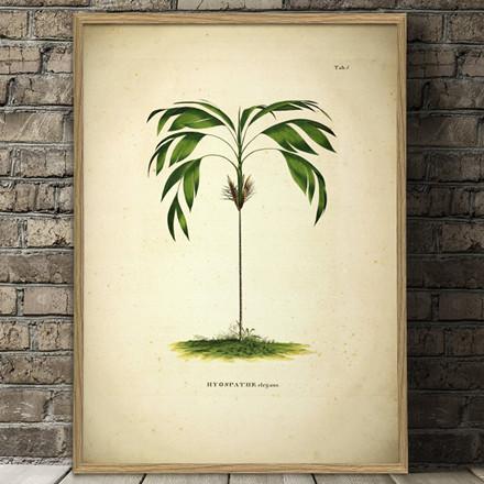 The Dybdahl Co. Hyospathe Elegans Botanical Palm Print